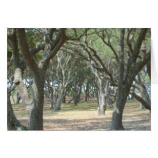 Trees At Beach Greeting Cards