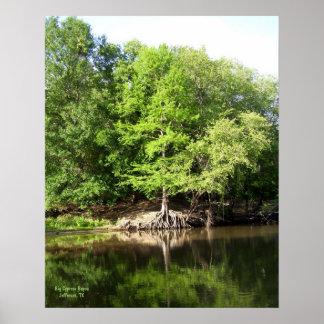 Trees at Big Cypress Bayou Print