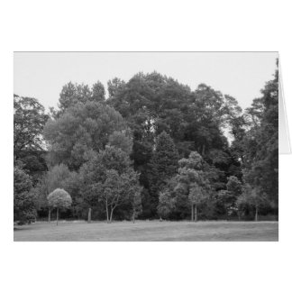 Trees at Bute Park, Cardiff - BW Greeting Card