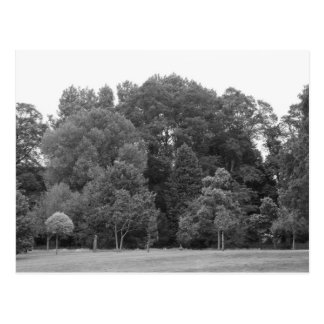 Trees at Bute Park, Cardiff - BW Postcard