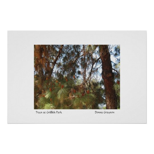 Trees at Griffith Park Poster