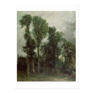 Trees at Hampstead Postcard