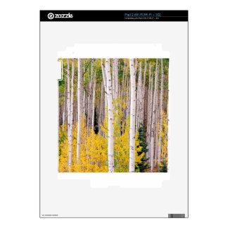 Trees Autumn Aspens Colorado Decals For iPad 2