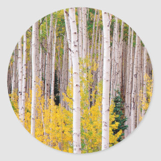 Trees Autumn Aspens Colorado Round Stickers