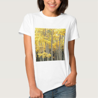 Trees Autumn Aspens Kenosha Pass Colorado T Shirt