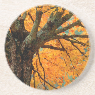 Trees Autumn Maple Bass Lake Drink Coasters