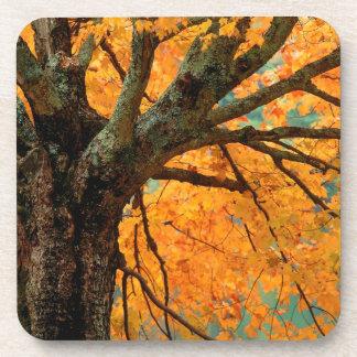 Trees Autumn Maple Bass Lake Beverage Coaster