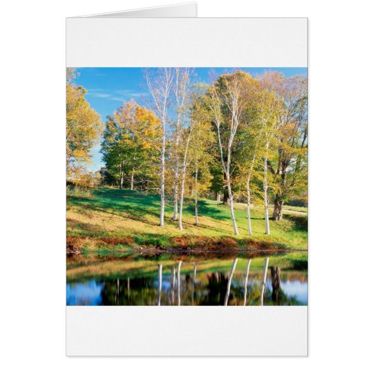 Trees Birch Vermont Card