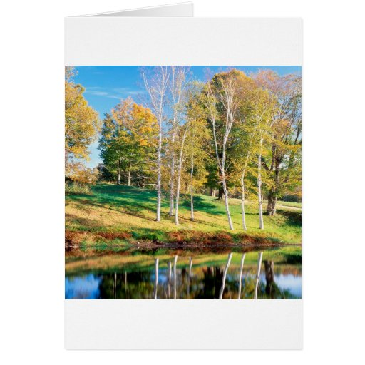 Trees Birch Vermont Greeting Cards