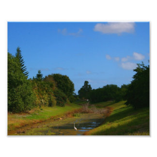 Trees blue sky small stream photograph in Florida