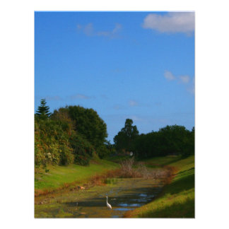 Trees blue sky small stream photograph in Florida Invitations