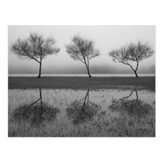 Trees by the lake postcards