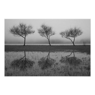 Trees by the lake poster