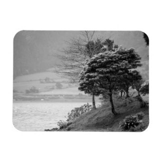 Trees by the lake rectangular photo magnet
