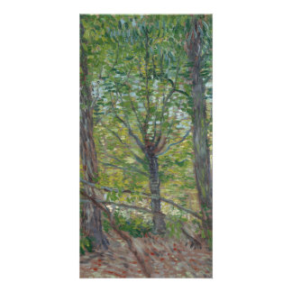 Trees by Vincent Van Gogh Card