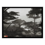 Trees - Carmel By The Sea, California Posters