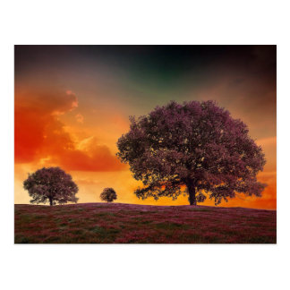 Trees colorful sky beautiful nature scenery postcard
