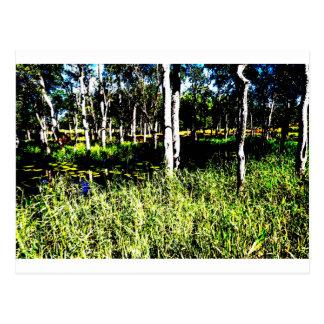 TREES & DAM,POND ABSTRACT PHOTO AUSTRALIA POSTCARD