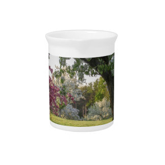 Trees Flower in the Spring Drink Pitcher