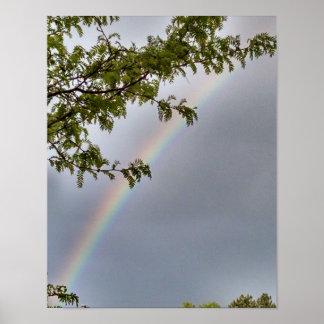 Trees, framing rainbow, in light gray sky poster