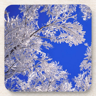 Trees Frosted Boulder Colorado Beverage Coasters