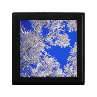 Trees Frosted Boulder Colorado Gift Boxes