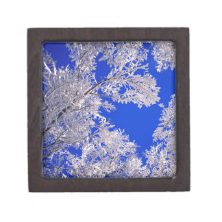 Trees Frosted Boulder Colorado Premium Gift Boxes