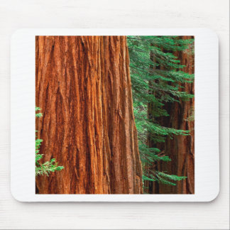 Trees Giant Sequoia Mariposa Grove Yosemite Mouse Pad