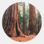 Trees Giants Calaveras Round Stickers