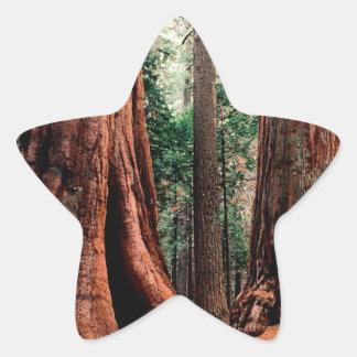 Trees Giants Calaveras Star Sticker