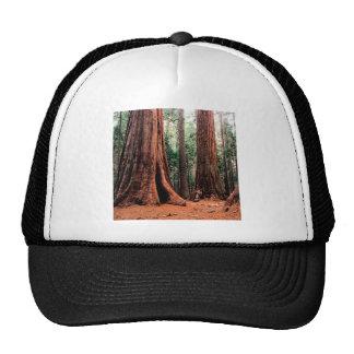 Trees Giants Calaveras Trucker Hat