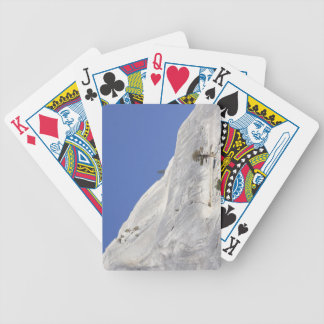 Trees growing in hostile granite environment bicycle playing cards