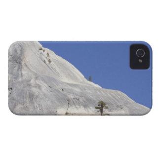Trees growing in hostile granite environment iPhone 4 cover