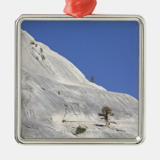 Trees growing in hostile granite environment metal ornament