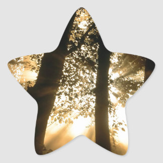 Trees Harpeth River Bank Franklin Tennessee Star Sticker