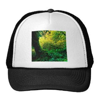 Trees Hoh Rain Olympic Trucker Hat