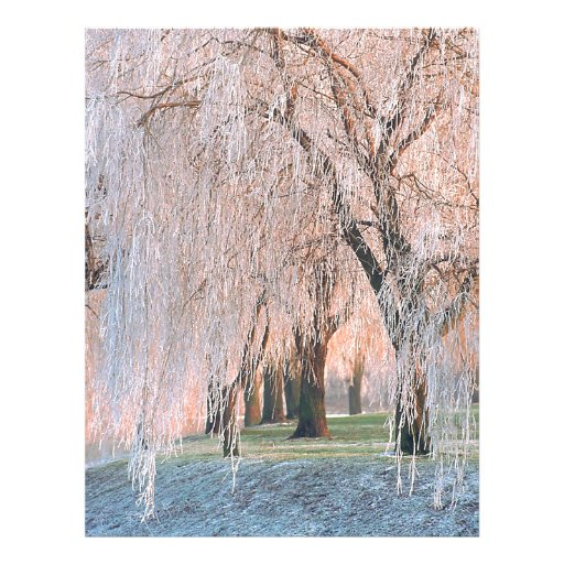 Trees Ice Covered Willow Letterhead Design