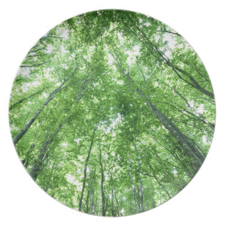 Trees in a forest from the bottom view dinner plate