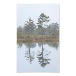 Trees in a mist in marsh photographic print