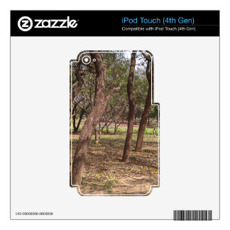 Trees in a park at fall iPod touch 4G skin