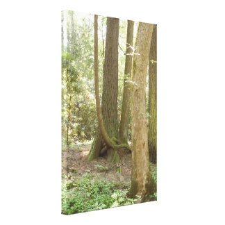 Trees in an Awkward Position Canvas Print