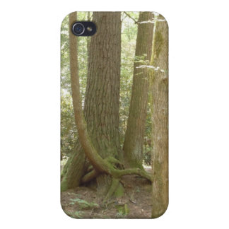Trees in an Awkward Position iPhone 4 Case