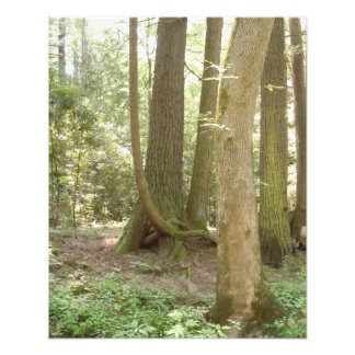 Trees in an Awkward Position Photo Print