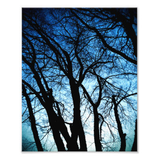 Trees in Black and Blue Photo Print