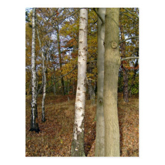 Trees In Forest Postcard