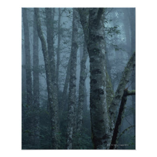 Trees in Forest with Mist Posters