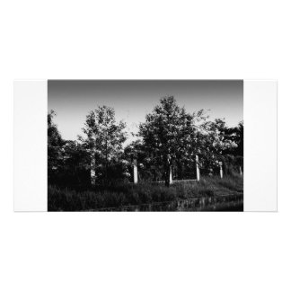 trees in grayscale photo card