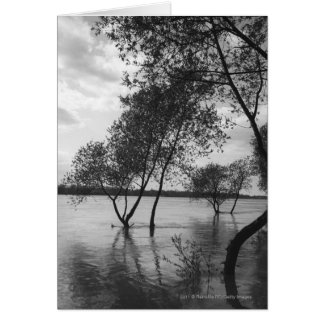 Trees in lake card