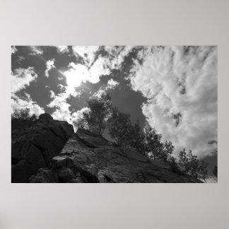 Trees in Mount Evans National Park Poster