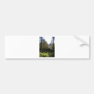 Trees in nature bumper sticker